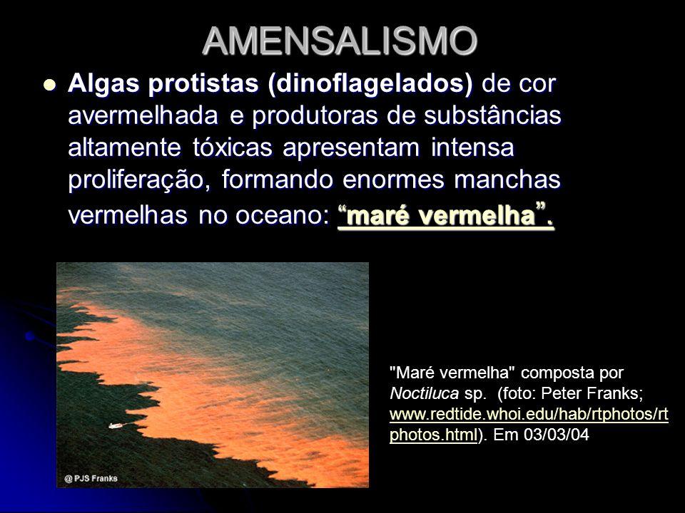 AMENSALISMO Algas protistas (dinoflagelados) de cor avermelhada e produtoras de substâncias altamente tóxicas apresentam intensa proliferação, formand