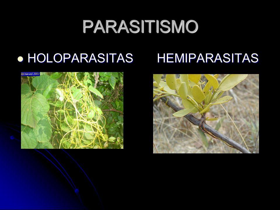 PARASITISMO HOLOPARASITASHEMIPARASITAS HOLOPARASITASHEMIPARASITAS