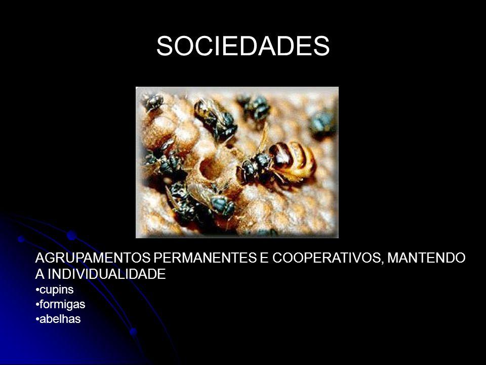 SOCIEDADES AGRUPAMENTOS PERMANENTES E COOPERATIVOS, MANTENDO A INDIVIDUALIDADE cupins formigas abelhas