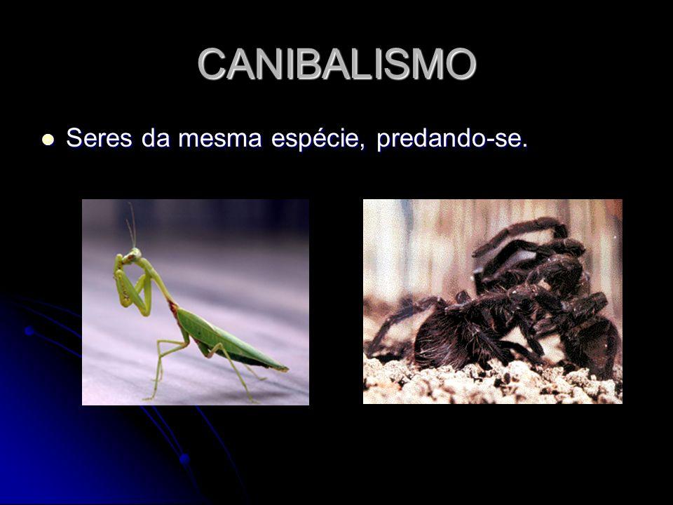 CANIBALISMO Seres da mesma espécie, predando-se. Seres da mesma espécie, predando-se.