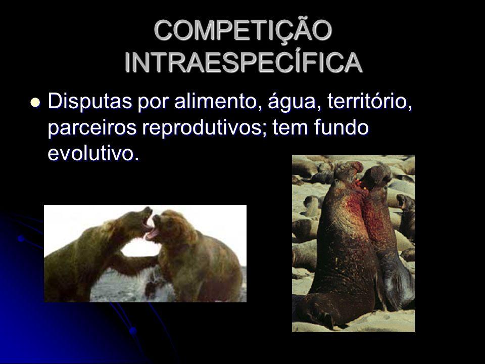 COMPETIÇÃO INTRAESPECÍFICA Disputas por alimento, água, território, parceiros reprodutivos; tem fundo evolutivo. Disputas por alimento, água, territór