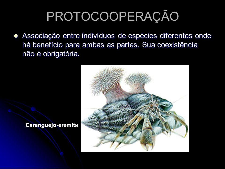 PROTOCOOPERAÇÃO Associação entre indivíduos de espécies diferentes onde há benefício para ambas as partes. Sua coexistência não é obrigatória. Associa
