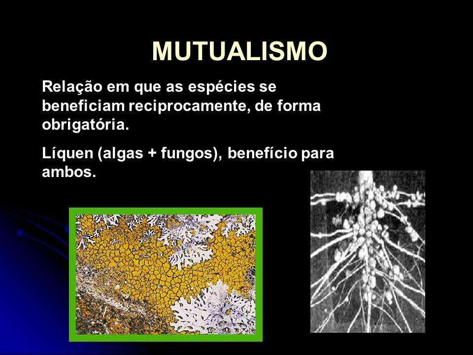 MUTUALISMO Relação em que as espécies se beneficiam reciprocamente, de forma obrigatória. Líquen (algas + fungos), benefício para ambos.