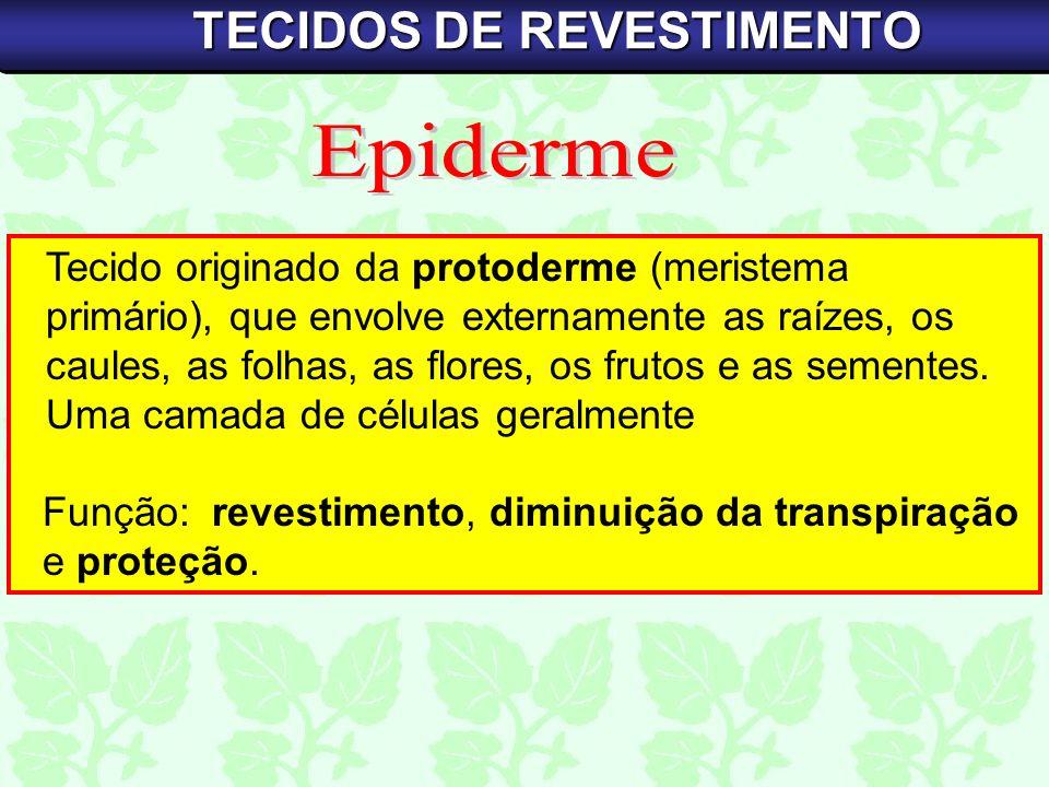 TECIDO MORTO REFORÇO LIGNINA MAIOR RESISTÊNCIA PRÓXIMO AOS TECIDOS DE CONDUÇÃO TECIDOS DE SUSTENTAÇÃO
