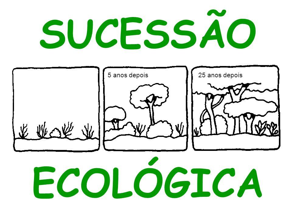 TIPOS DE SUCESSÃO ECOLÓGICA Primária: em substratos não previamente ocupados por seres vivos (afloramento rochosos, exposição de camadas profundas do solo, lava vulcânica recém solidificada)