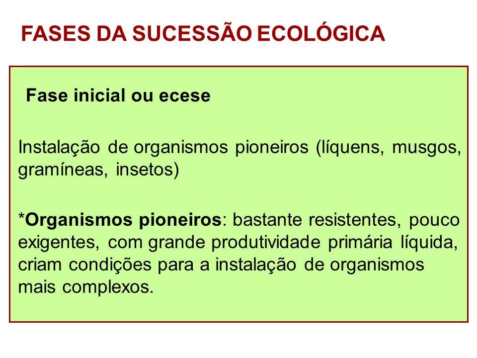 Fase intermediária ou sere (séries) Instalação de organismos mais complexos que os pioneiros (arbustos e ervas, roedores...) Maior sombreamento e retenção de umidade.