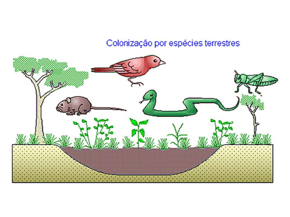 GRÁFICOS DA SUCESSÃO ECOLÓGICA Unidades Variáveis tempo PPL respiração PPB biomassa