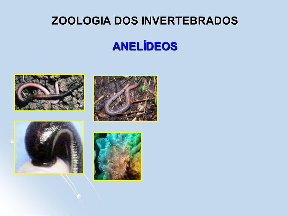 ZOOLOGIA DOS INVERTEBRADOS ANELÍDEOS