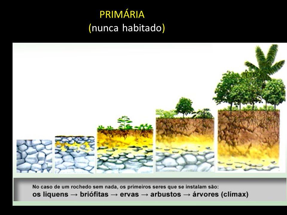 PRIMÁRIA (nunca habitado)