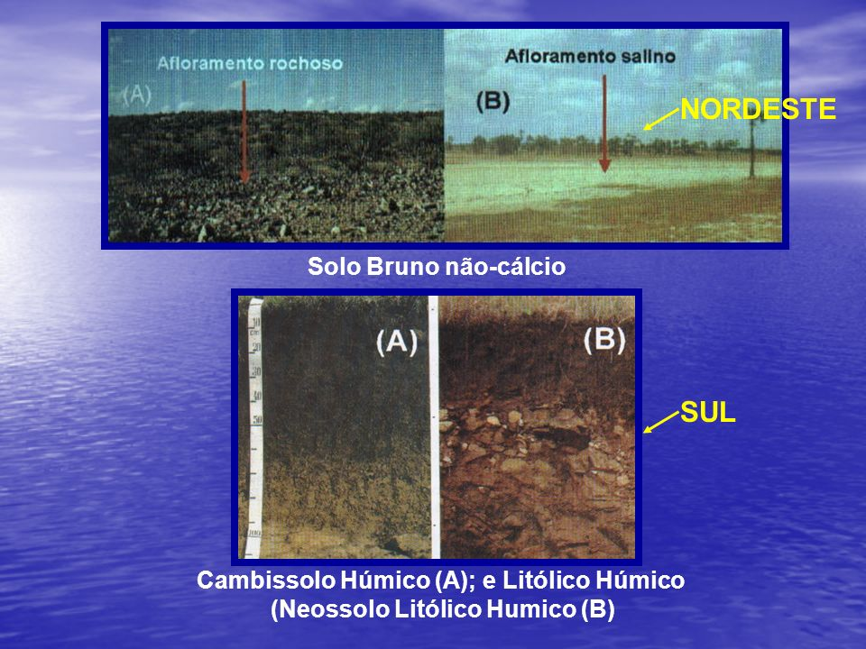 Corte vertical do solo para mostrar um perfil com seus horizontes e camadas