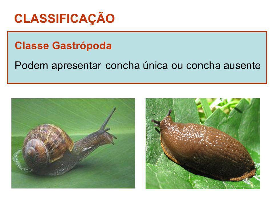 CLASSIFICAÇÃO Classe Gastrópoda Podem apresentar concha única ou concha ausente