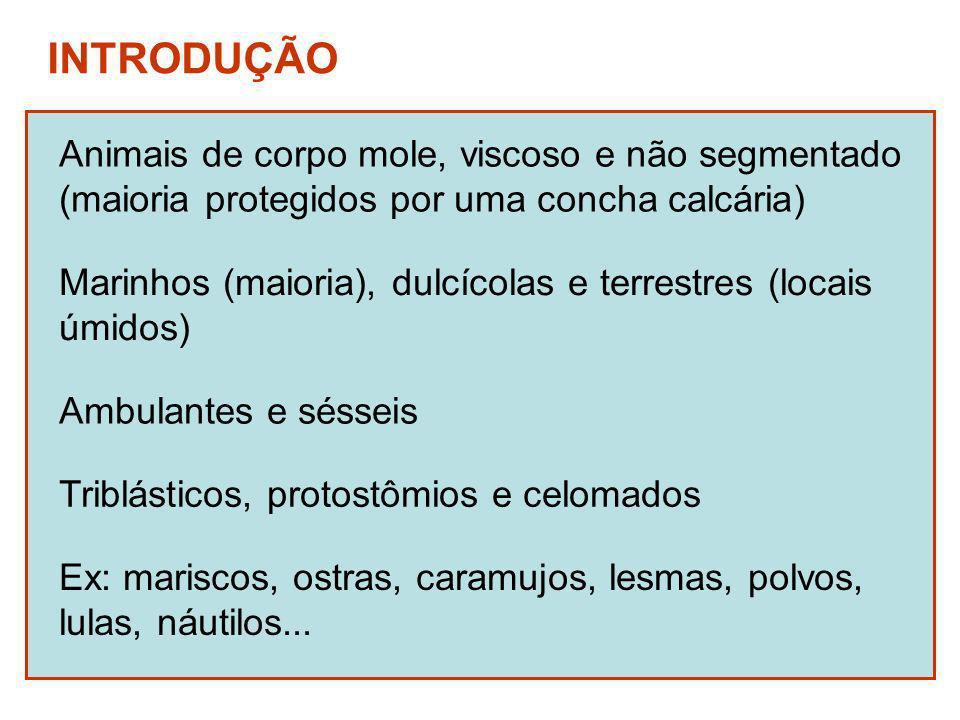 INTRODUÇÃO Marinhos (maioria), dulcícolas e terrestres (locais úmidos) Ambulantes e sésseis Ex: mariscos, ostras, caramujos, lesmas, polvos, lulas, náutilos...