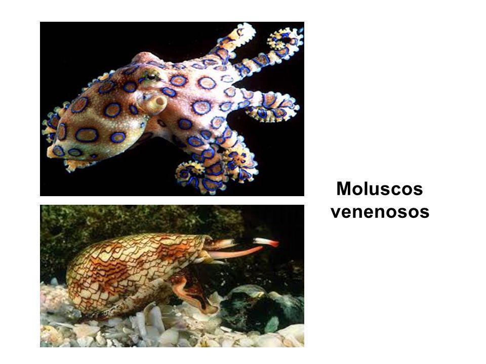 Moluscos venenosos