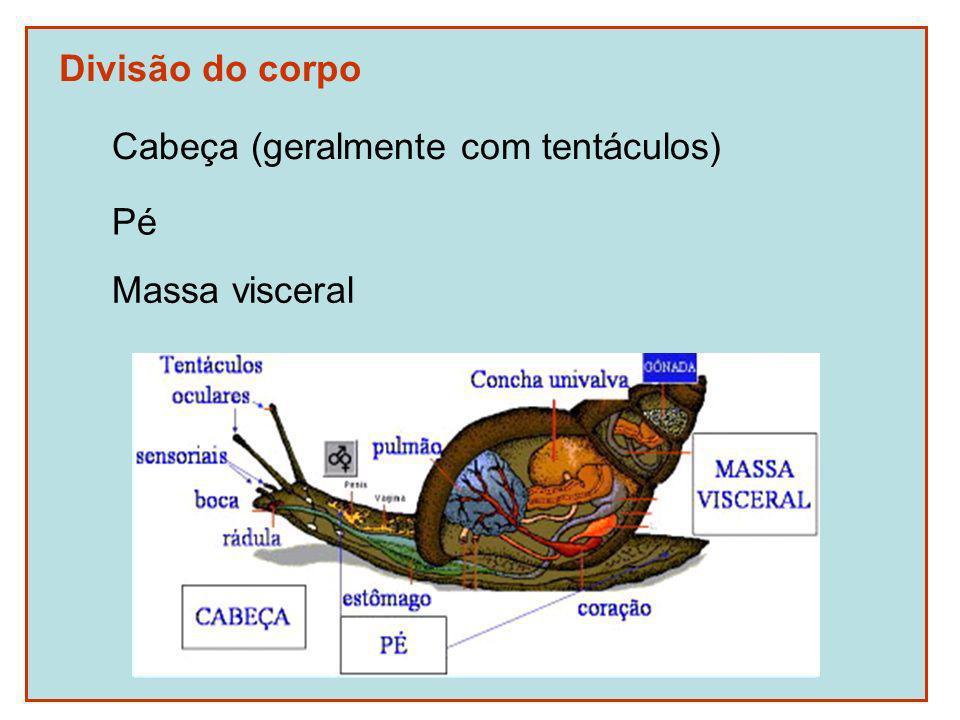 Divisão do corpo Cabeça (geralmente com tentáculos) Pé Massa visceral