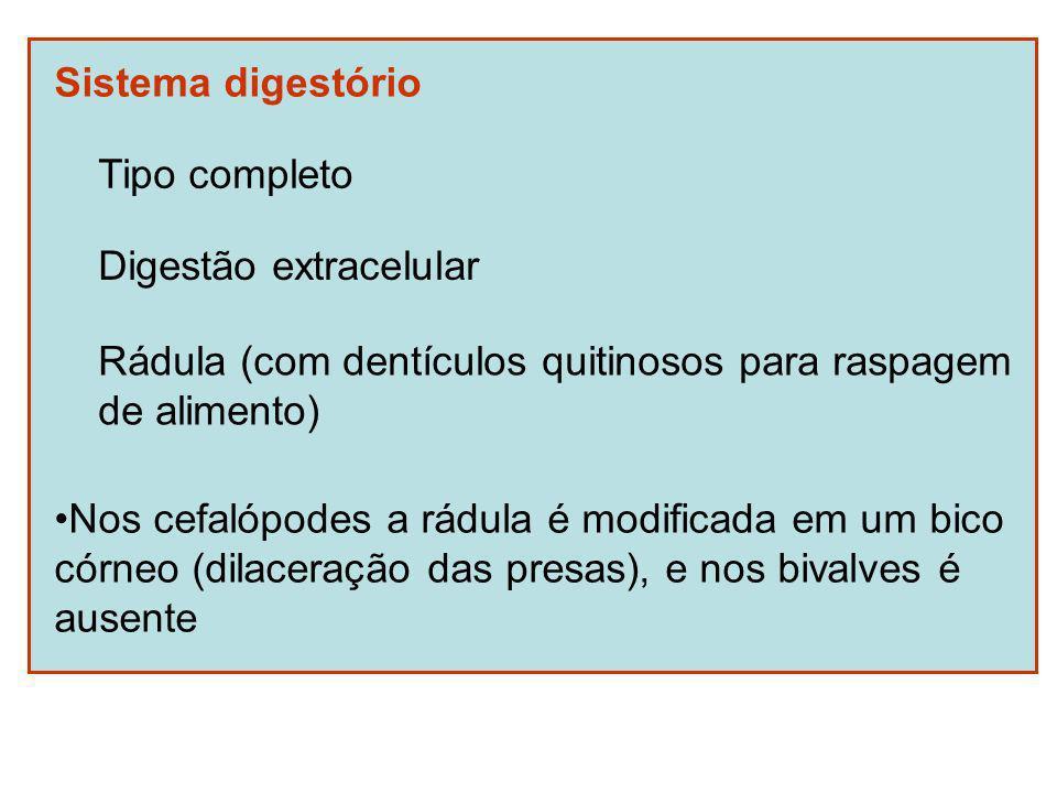 Sistema digestório Tipo completo Digestão extracelular Rádula (com dentículos quitinosos para raspagem de alimento) Nos cefalópodes a rádula é modificada em um bico córneo (dilaceração das presas), e nos bivalves é ausente