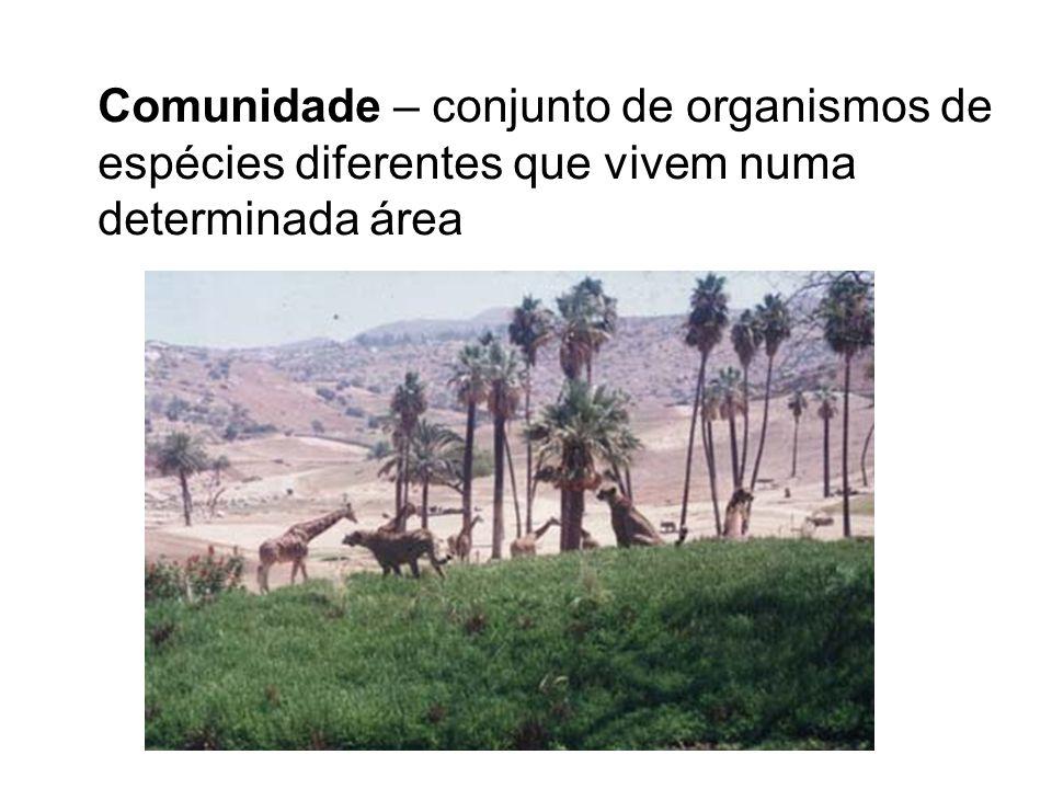 Comunidade – conjunto de organismos de espécies diferentes que vivem numa determinada área