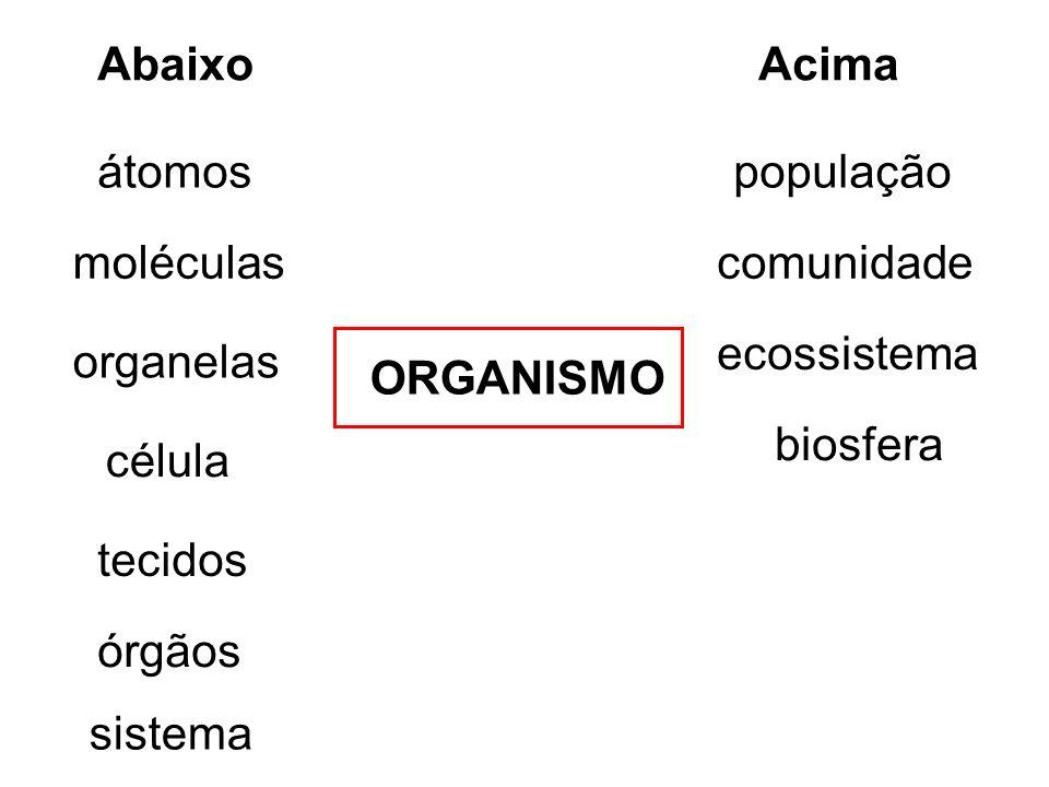 átomos moléculas organelas célula tecidos órgãos sistema AbaixoAcima população comunidade ecossistema biosfera ORGANISMO