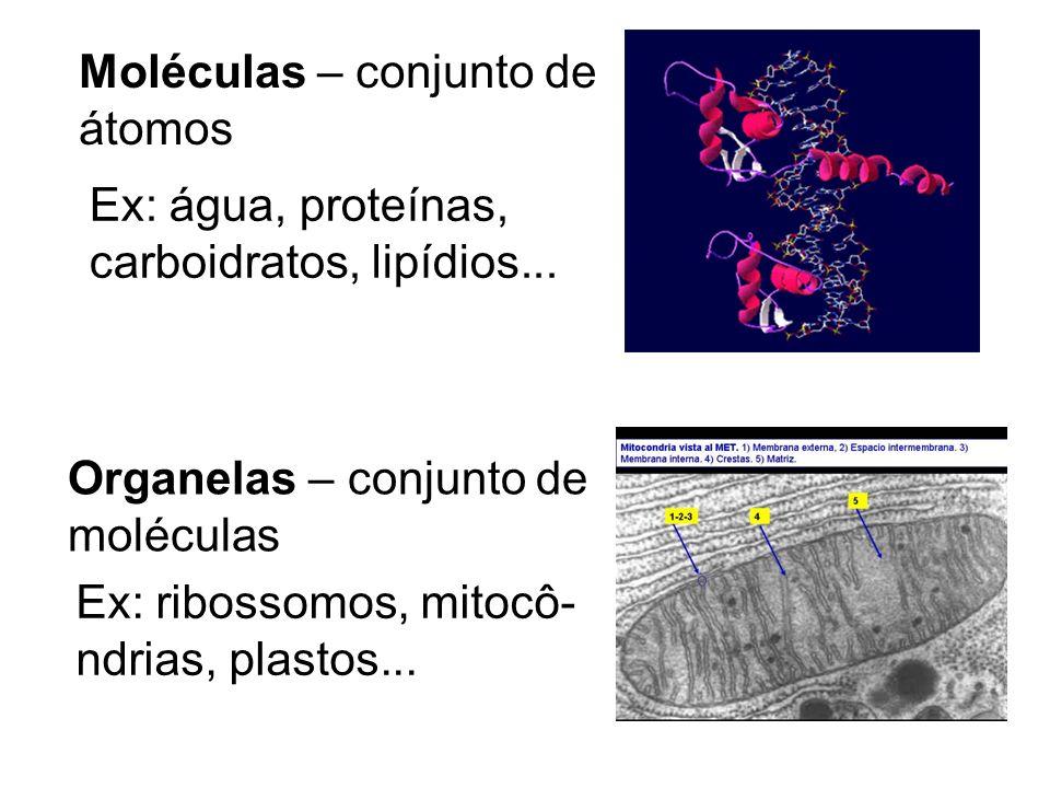Células – conjunto de organelas Ex: hemácea, neurônio, espermatozóide,óvulo, zigoto...