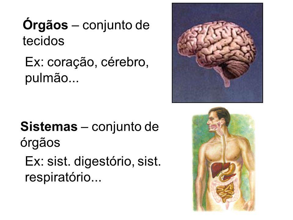 Órgãos – conjunto de tecidos Ex: coração, cérebro, pulmão... Sistemas – conjunto de órgãos Ex: sist. digestório, sist. respiratório...