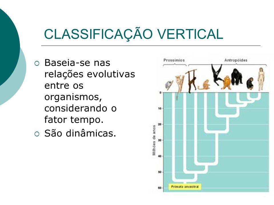 CLASSIFICAÇÃO VERTICAL Baseia-se nas relações evolutivas entre os organismos, considerando o fator tempo. São dinâmicas.
