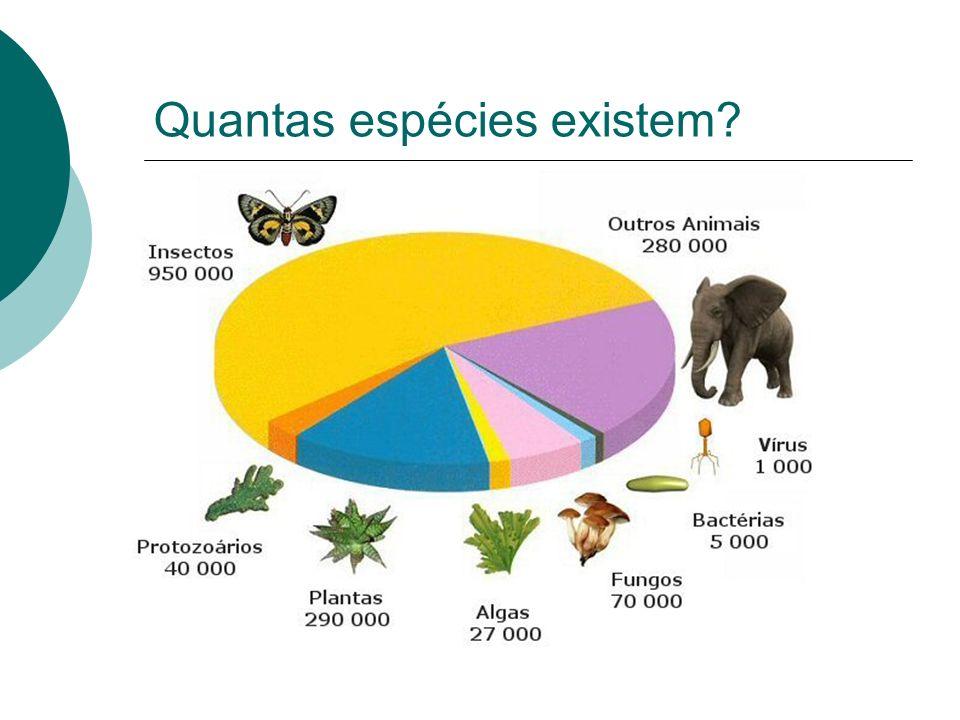 Árvores filogenéticas São diagramas que representam as relações de parentesco evolutivo entre grupos de seres vivos.