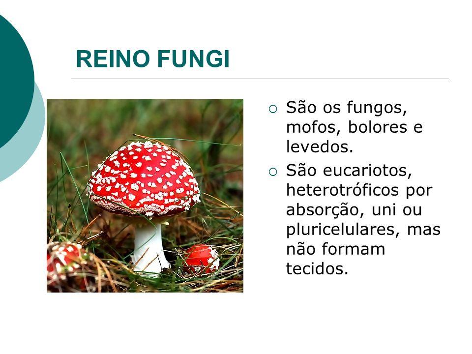 REINO FUNGI São os fungos, mofos, bolores e levedos. São eucariotos, heterotróficos por absorção, uni ou pluricelulares, mas não formam tecidos.