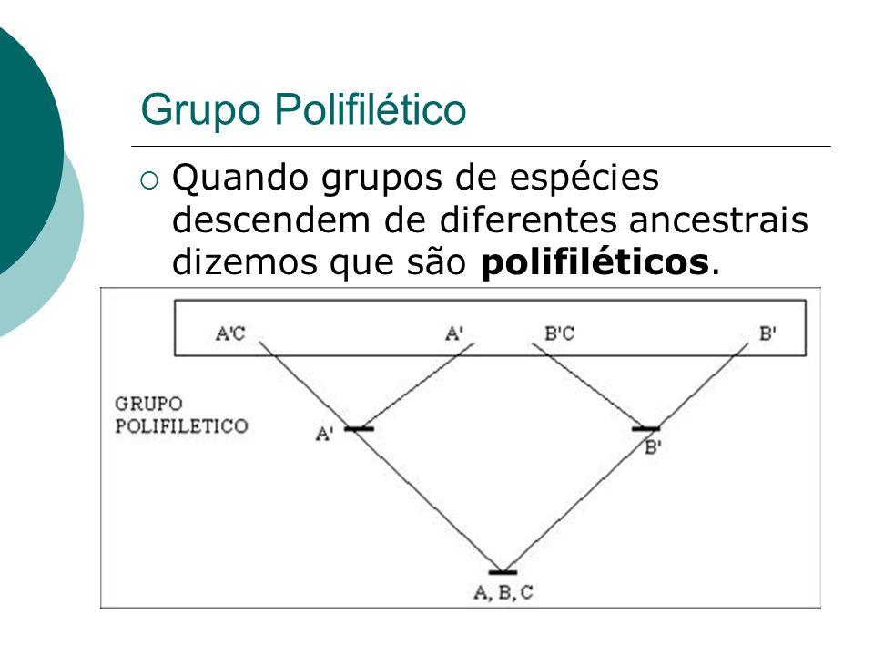 Grupo Polifilético Quando grupos de espécies descendem de diferentes ancestrais dizemos que são polifiléticos.