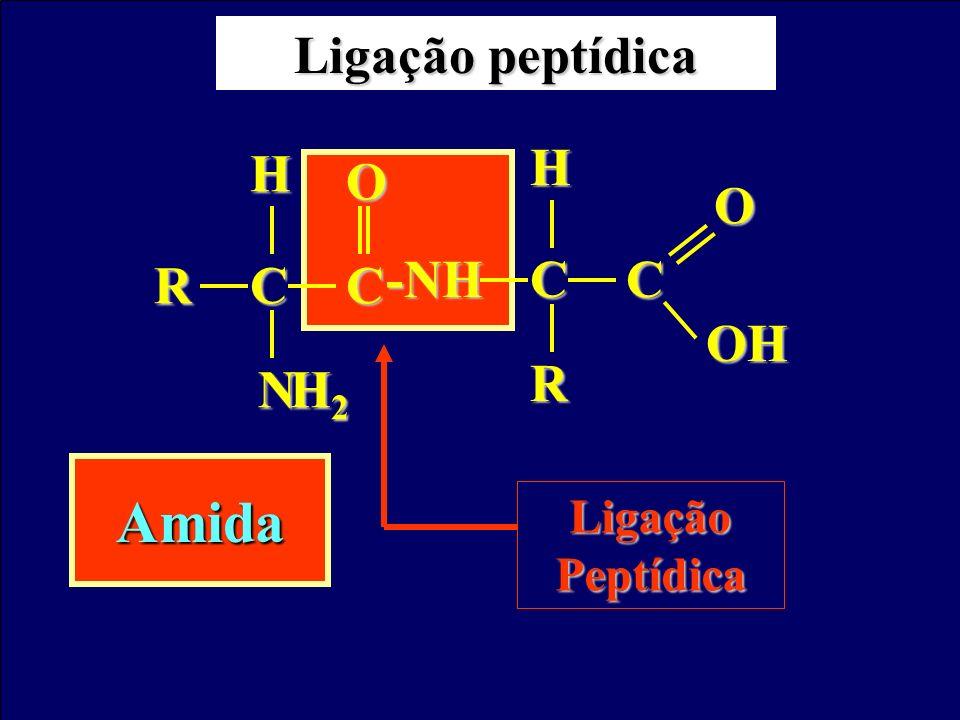 Prof. Sidnei Ligação peptídica Ligação Peptídica CCR N H H2H2H2H2 O CC-NHHOH O R Amida