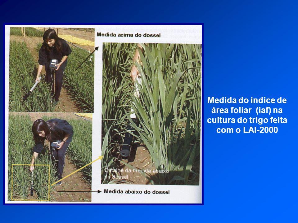Medida do índice de área foliar (iaf) na cultura do trigo feita com o LAI-2000