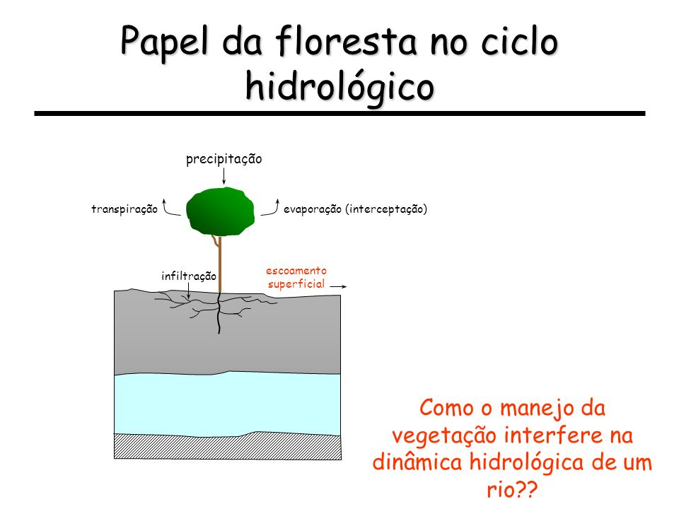 Papel da floresta no ciclo hidrológico Como o manejo da vegetação interfere na dinâmica hidrológica de um rio?? infiltração escoamento superficial pre