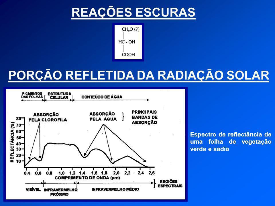 REAÇÕES ESCURAS PORÇÃO REFLETIDA DA RADIAÇÃO SOLAR Espectro de reflectância de uma folha de vegetação verde e sadia