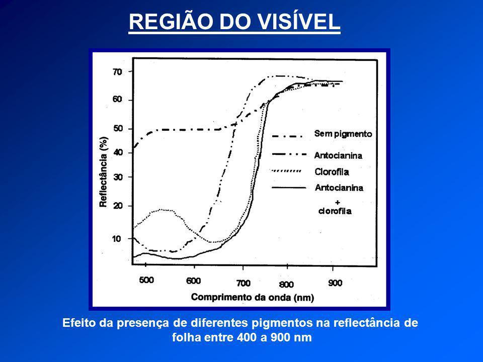 REGIÃO DO VISÍVEL Efeito da presença de diferentes pigmentos na reflectância de folha entre 400 a 900 nm
