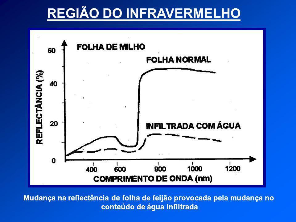 REGIÃO DO INFRAVERMELHO Mudança na reflectância de folha de feijão provocada pela mudança no conteúdo de água infiltrada
