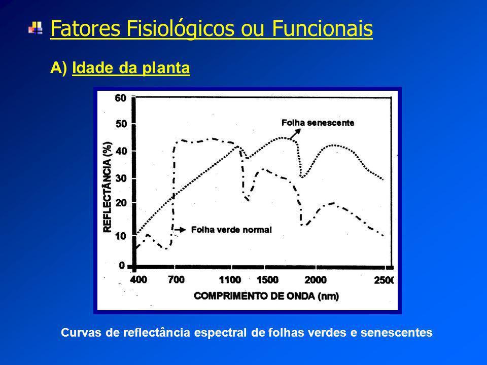 Fatores Fisiológicos ou Funcionais A) Idade da planta Curvas de reflectância espectral de folhas verdes e senescentes