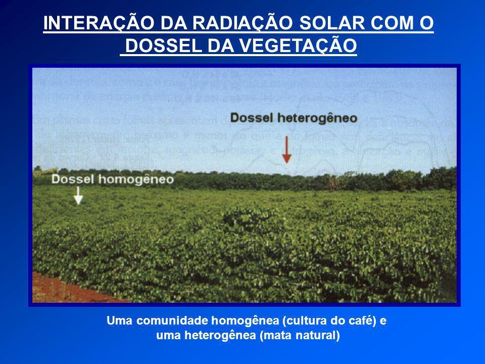 INTERAÇÃO DA RADIAÇÃO SOLAR COM O DOSSEL DA VEGETAÇÃO Uma comunidade homogênea (cultura do café) e uma heterogênea (mata natural)