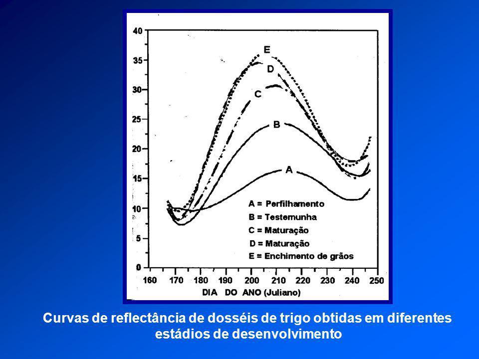 Curvas de reflectância de dosséis de trigo obtidas em diferentes estádios de desenvolvimento