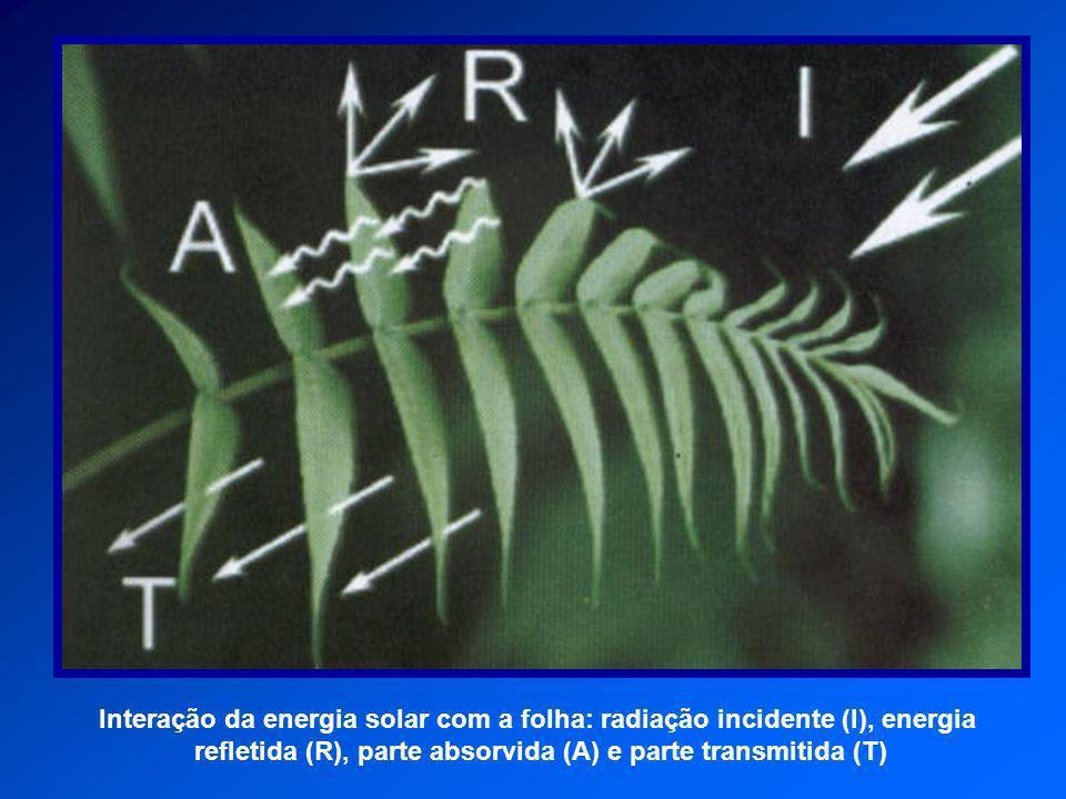Interação da energia solar com a folha: radiação incidente (I), energia refletida (R), parte absorvida (A) e parte transmitida (T)