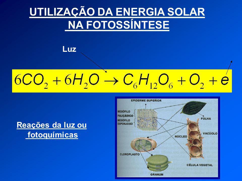UTILIZAÇÃO DA ENERGIA SOLAR NA FOTOSSÍNTESE Luz Reações da luz ou fotoquímicas