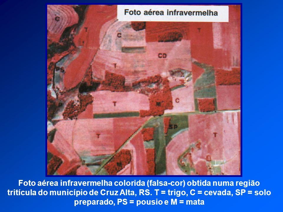 Foto aérea infravermelha colorida (falsa-cor) obtida numa região tritícula do município de Cruz Alta, RS. T = trigo, C = cevada, SP = solo preparado,