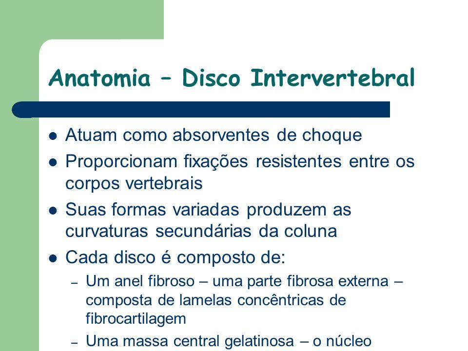 Anatomia – Disco Intervertebral Atuam como absorventes de choque Proporcionam fixações resistentes entre os corpos vertebrais Suas formas variadas pro