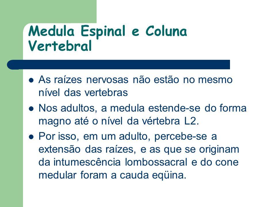 Medula Espinal e Coluna Vertebral As raízes nervosas não estão no mesmo nível das vertebras Nos adultos, a medula estende-se do forma magno até o níve