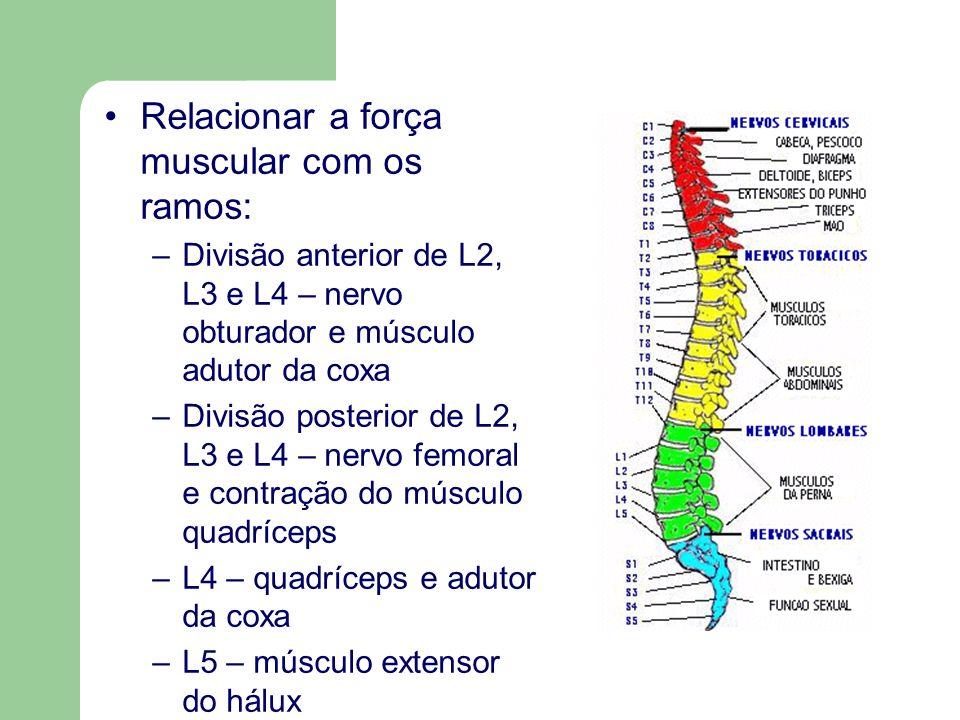 Relacionar a força muscular com os ramos: –Divisão anterior de L2, L3 e L4 – nervo obturador e músculo adutor da coxa –Divisão posterior de L2, L3 e L