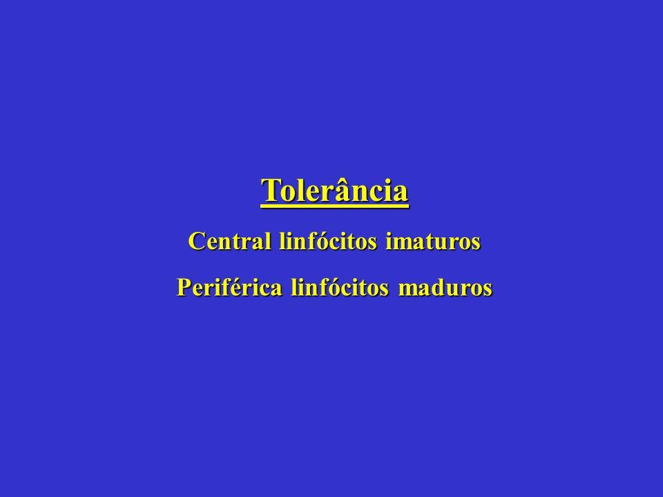 Tolerância Central linfócitos imaturos Periférica linfócitos maduros