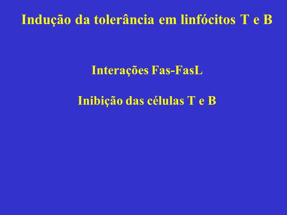 Indução da tolerância em linfócitos T e B Interações Fas-FasL Inibição das células T e B