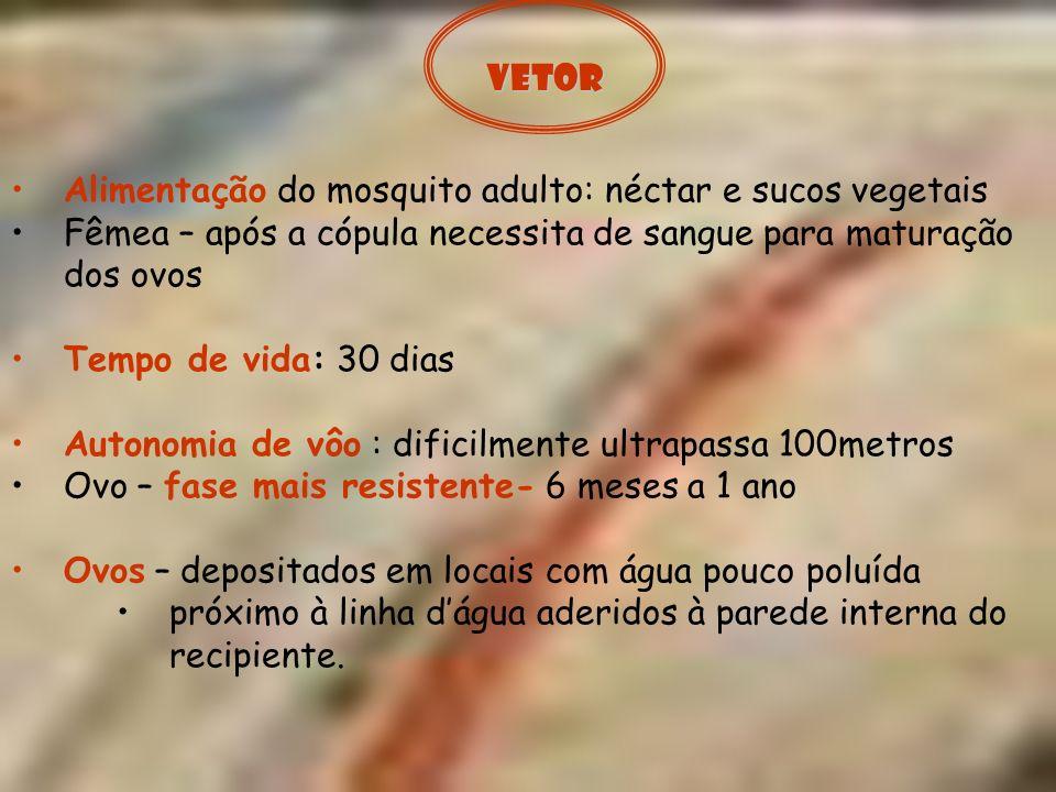 Alimentação do mosquito adulto: néctar e sucos vegetais Fêmea – após a cópula necessita de sangue para maturação dos ovos Tempo de vida: 30 dias Auton