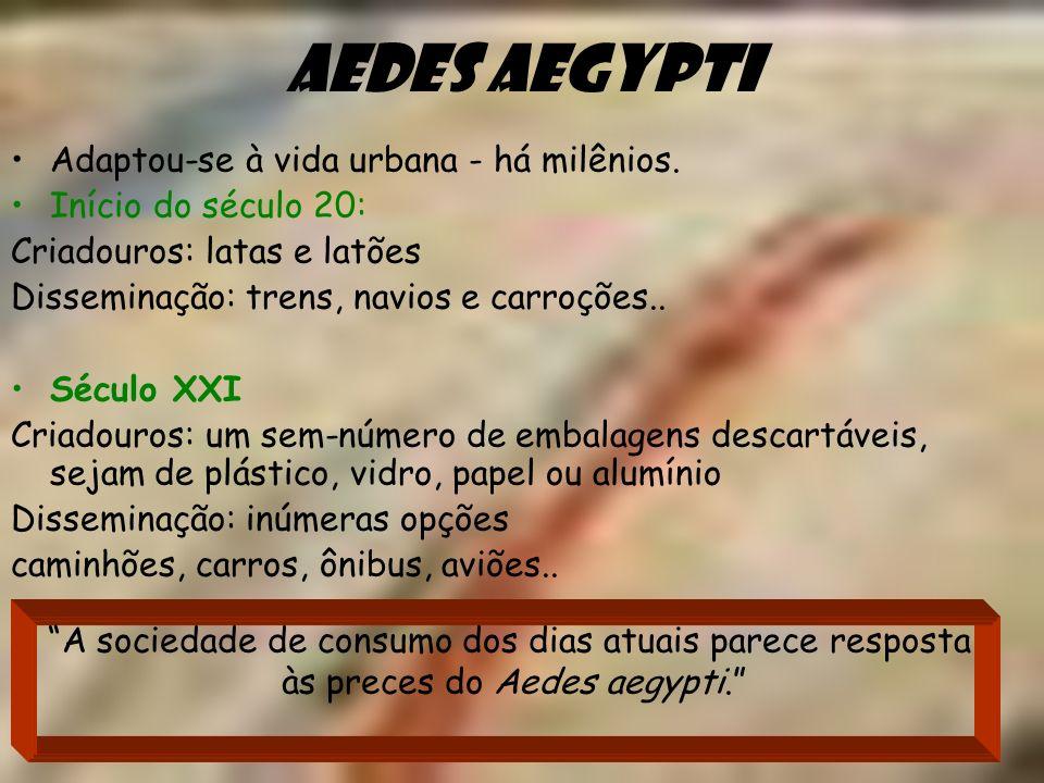 Aedes aegypti Adaptou-se à vida urbana - há milênios. Início do século 20: Criadouros: latas e latões Disseminação: trens, navios e carroções.. Século