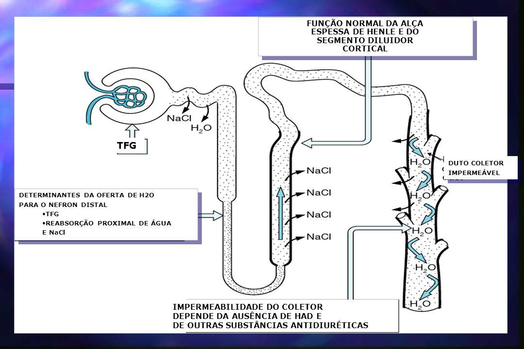 DETERMINANTES DA OFERTA DE H2O PARA O NEFRON DISTAL TFG REABSORÇÃO PROXIMAL DE ÁGUA E NaCl DETERMINANTES DA OFERTA DE H2O PARA O NEFRON DISTAL TFG REA