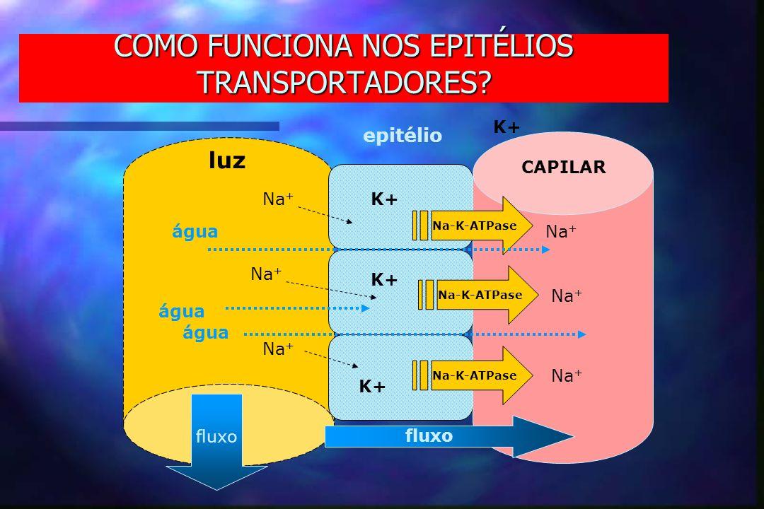 COMO FUNCIONA NOS EPITÉLIOS TRANSPORTADORES? luz epitélio CAPILAR fluxo Na-K-ATPase Na + água K+ fluxo