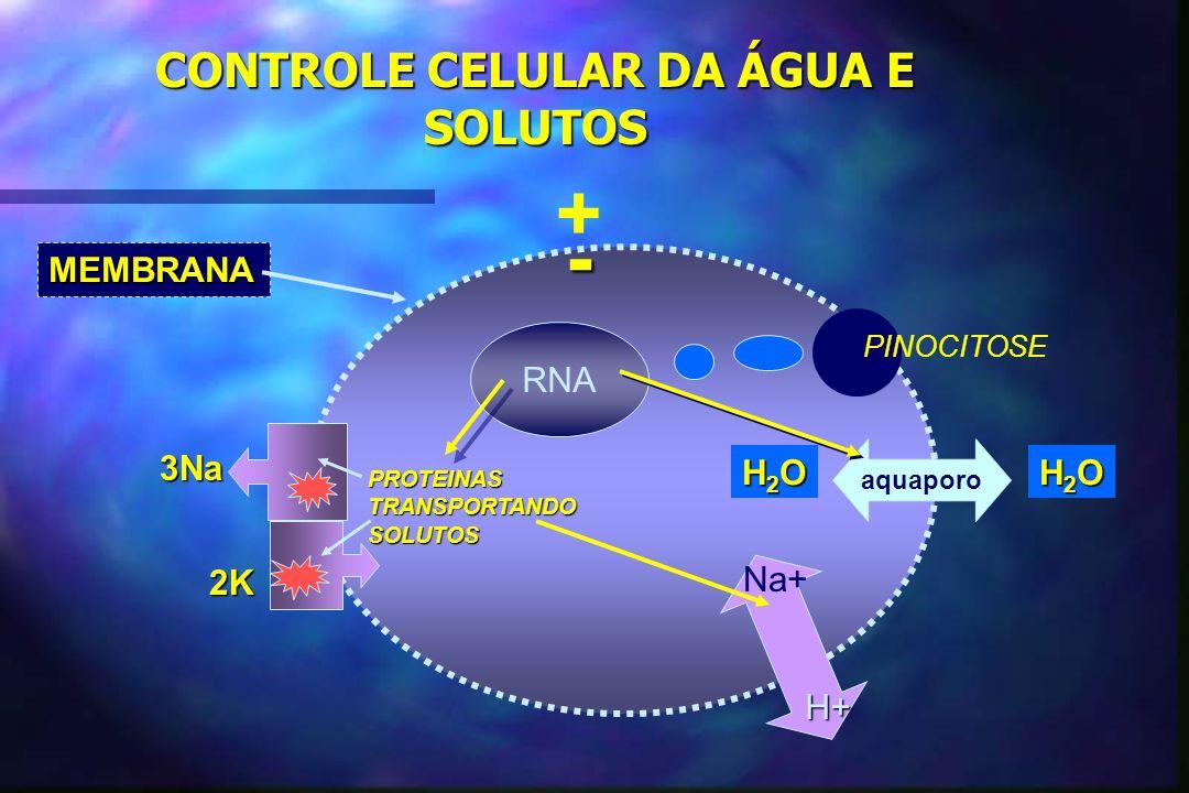 AVALIAÇÃO CLÍNICA DO ESPAÇO EXTRACELULAR ( sódio corporal) n Intravascular –Arterial n P.A.