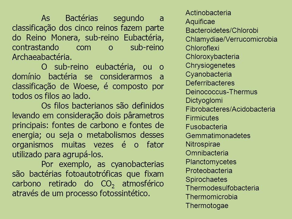 Actinobacteria Aquificae Bacteroidetes/Chlorobi Chlamydiae/Verrucomicrobia Chloroflexi Chloroxybacteria Chrysiogenetes Cyanobacteria Deferribacteres D